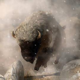 Buffalo In A Blizzard by Daniel Eskridge