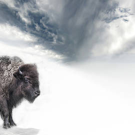 Buffalo Winter by Evie Carrier