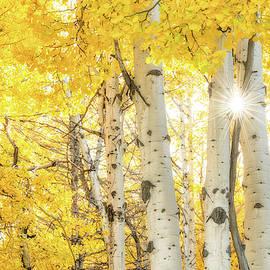 Burst Of Fall by Ann Skelton
