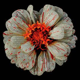 Bursting Wildflower by Andrea Swiedler