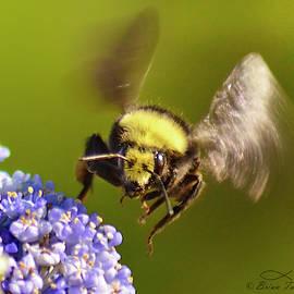 Busy As A Bumblebee by Brian Tada