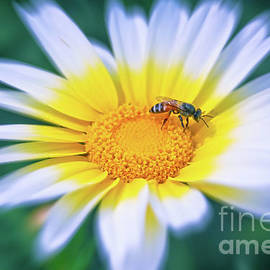 Busy Bee by Neha Gupta