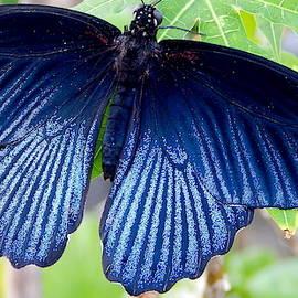 Butterflies Live - 20 by Arlane Crump