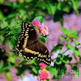Butterfly and Lantana. by Minnetta Heidbrink