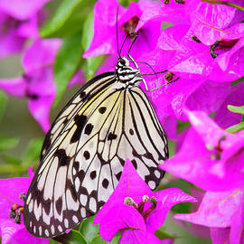 Butterfly In The Pink by Sabrina L Ryan