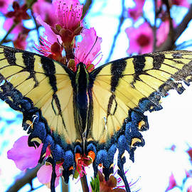 Butterfly on my Peachtree by Cathy P Jones