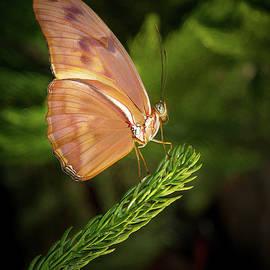 Butterfly On Perch by Jean Noren