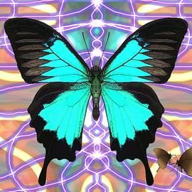 Ulysses Butterfly Webbed Patterned by Joan Stratton