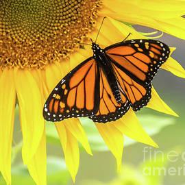 Butterfly Petals by Cheryl Baxter