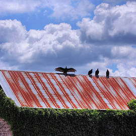 Buzzards On Old Stone Barn by Anna Louise
