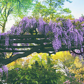 A Whiff of Wisteria   by Jessica Jenney