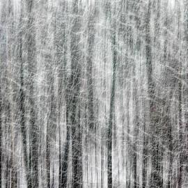 Francis Sullivan - C and O Towpath Blizzard