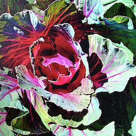 Cabbage by John Dyess