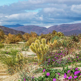 Peter Tellone - Cactus and Sand Verbena