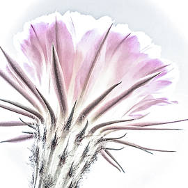 Cactus Elegance by Veronika Countryman