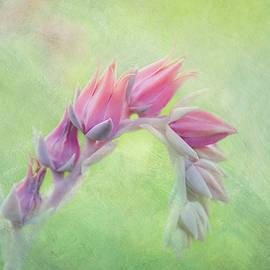 Cactus Flower by Terry Davis