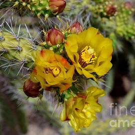 Cactus Flower Trio  by Janet Marie
