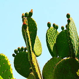 Cactus Macro 4 by Loretta S