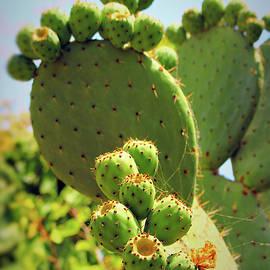 Cacti Portrait by Loretta S