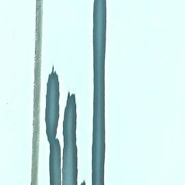 Cactus Shadows on Concrete Wall by Bonnie See