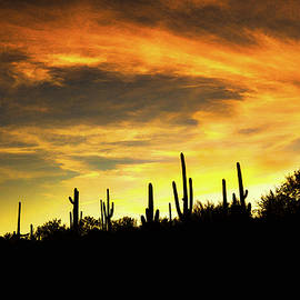 Cactus Silhouettes  by Chance Kafka