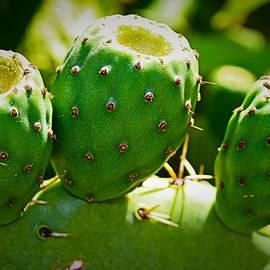 Cactus Trio  by Loretta S