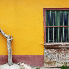 Cactus Trunk And Window Putre Chile by James Brunker