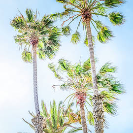 California Dreaming Palm Trees by Gene Parks