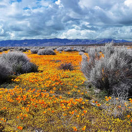 California Poppy Patch by Glenn McCarthy Art and Photography
