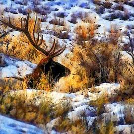Camouflage Buck by Mario Carini