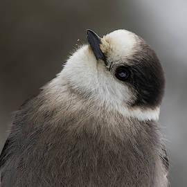Canada's national bird by Mircea Costina Photography