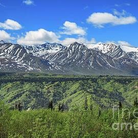 Canadian Rockies In The Yukon by Robert Bales