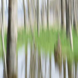 Canadice Lake Trees by Joann Long