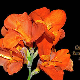 Canna Lily - South Pacific Orange 001 text by George Bostian