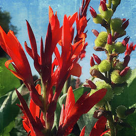 Canna's by Janet Duffey
