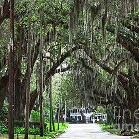 Canopy Road by John Zawacki