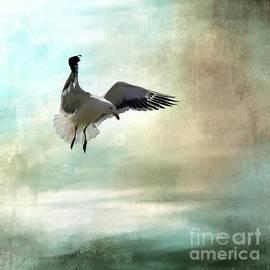 Cape Gull In Flight by Eva Lechner