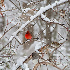Cardinal Bird Party  by Peggy Franz