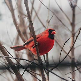 Cardinal in My Window by Amber Flowers