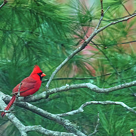 Bellesouth Studio - Cardinal In Tulip Poplar