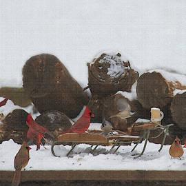 Cardinals Everywhere by Dan Friend