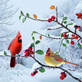 Cardinals in the Snow by M Spadecaller