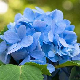 Carolina Blue Perfection by Mary Ann Artz