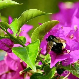 Carpenter Bee by Craig Wood