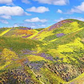 Carrizo Plain Superbloom Panorama 2017 by Lynn Bauer