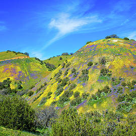 Carrizo's Easter Egg Hill - Superbloom 2019 by Lynn Bauer