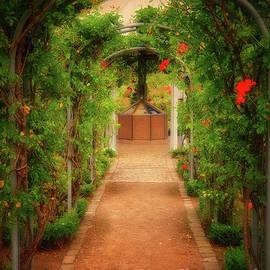 Cascading Roses by Yvonne Johnstone