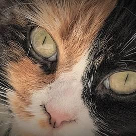 Cat Eyes by Mary Ann Artz