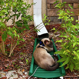 Cat in Downspout Tray by Sally Weigand