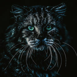 Cat by Rob D Imagery